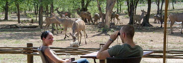 Ongava Tented Camp, Etosha National Park | Namibia