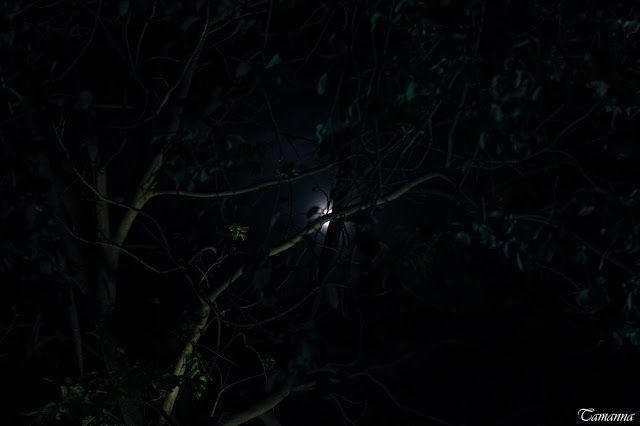 Tamanna S: On one scary night..