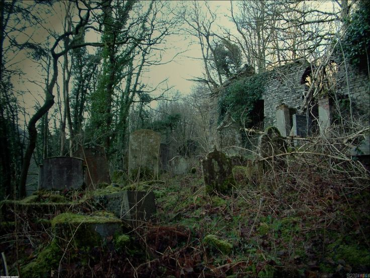 abandoned church and cemetery | death | Pinterest | Trees ...