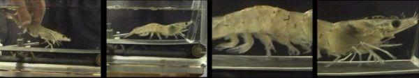The Cost of a Shrimp Treadmill - Neatorama