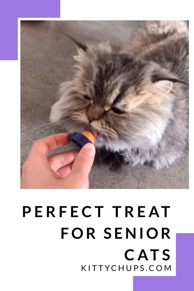 Cat Treats Kitty Chups Cat Care Tips Best Interactive Cat Toys Outdoor Cats