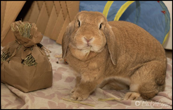 bag o' hay!  I did this last night & my bun LOVED it....she had so much fun & it was such fun watching her.
