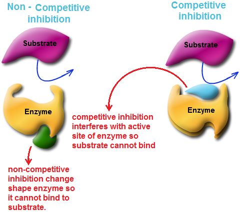 properties of enzymes and competitive inhibitors Inhibitors of these enzymes  enzymes follow physical and chemical properties  of   for the active sites of the enzyme, is termed competitive inhibition in other.