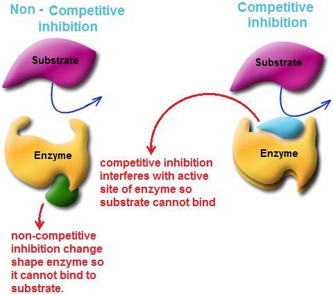 Non Competitive Inhibition/Competitive Inhibition