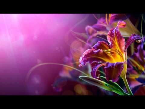 3 Hours Relaxing Music | Sleep Music, Meditation, Musica para Relaxar, Dormir - YouTube