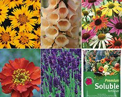Add a riot of colour and shape to your garden, with repeat performance year after year. A mix of these herbaceous perennials will fill your ...