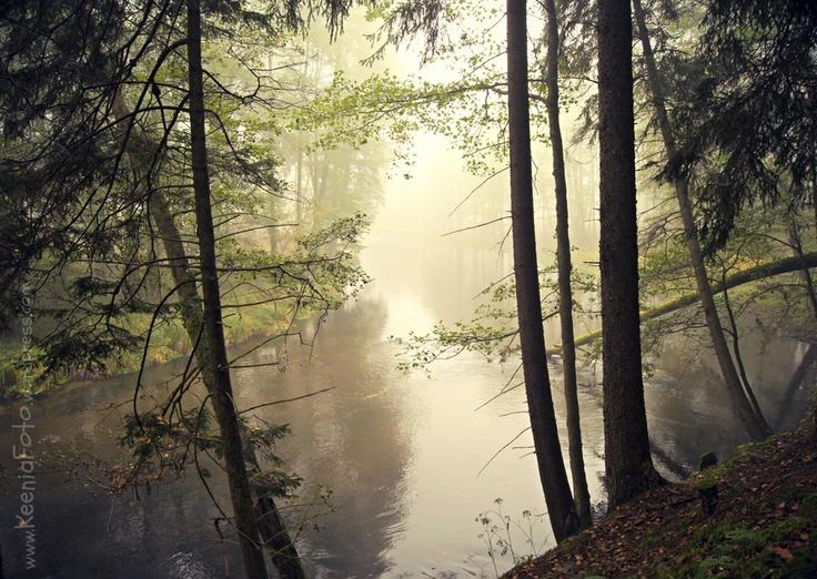 river in a fog