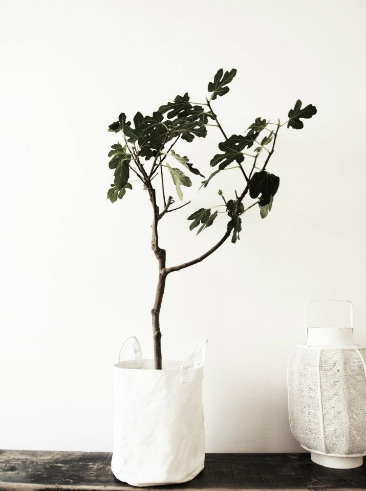 indoor potted plant/small tree, in a sack, to soften and clean up the look
