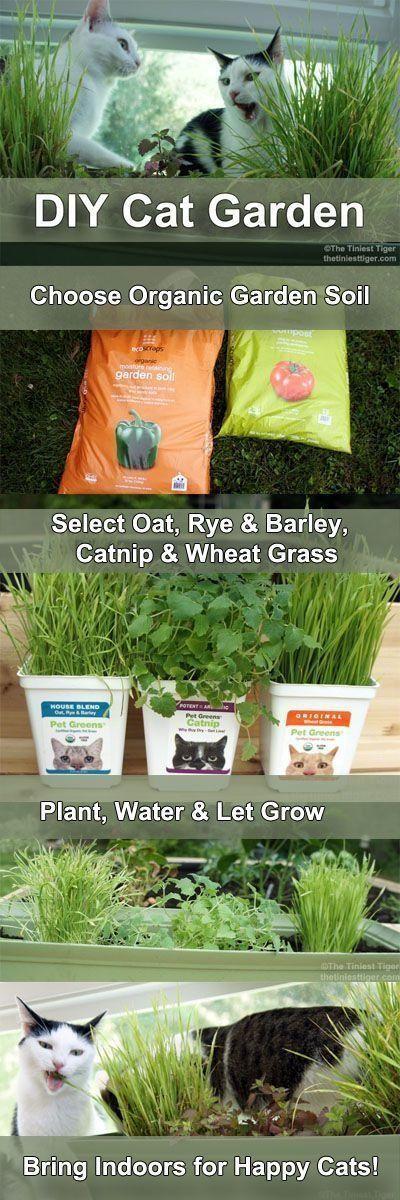 A munchable cat garden.