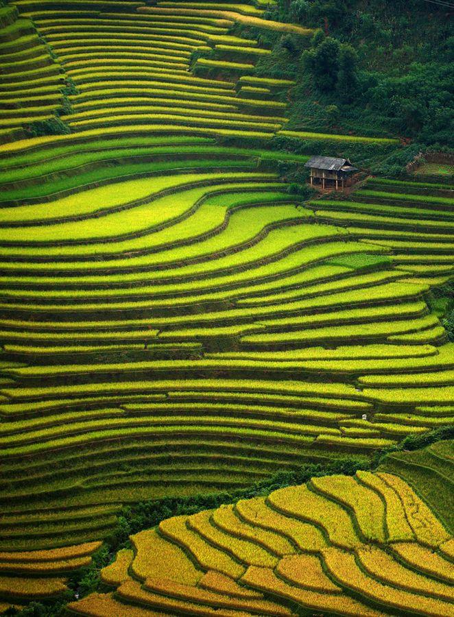 Mu Cang Chai, Vietnam. By Viet Hung.