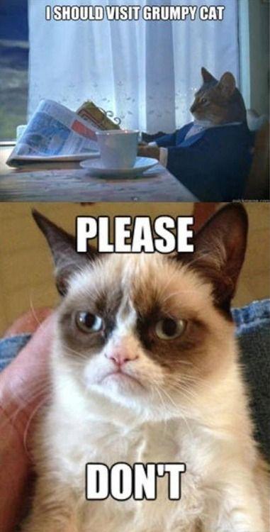 Grumpy cat GrumpyCat Grumpy Cat Humor
