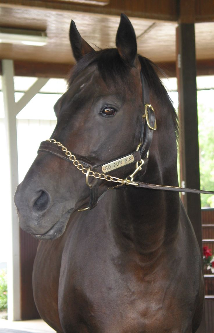 Go for Gin - 1994 Kentucky Derby winner - oldest living at the Hall of Champions, Kentucky Horse Park.