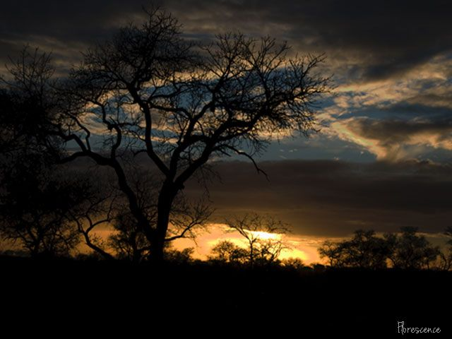 Sunrise in the Kruger National Park, Mpumalanga, South Africa, July 2009 (c) Florescence