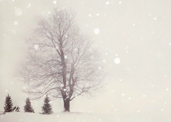Snow Flurries - Winter Photography, Pale Ivory White, Trees, Woodland Photograph, Landscape, Nature Photography.