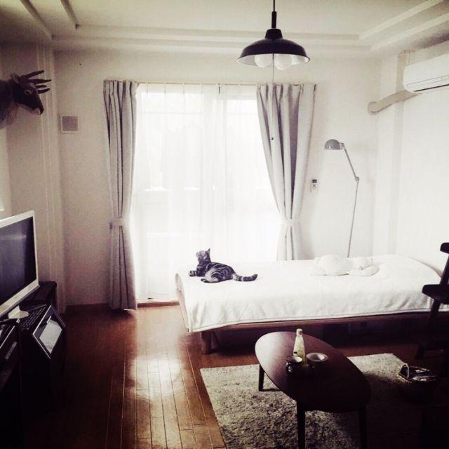 Chlokoさんの、猫と1人暮らし,1K 1人暮らし,1K 部屋全体,ラダーシェルフ,一人暮らし,部屋全体,のお部屋写真