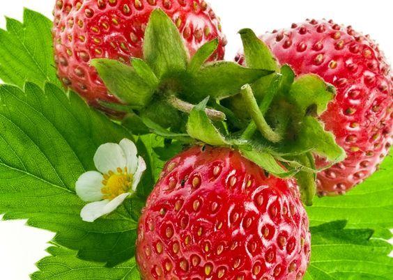 Aardbeien kweken, hoe doe je dat precies? Handige tips! [blog]