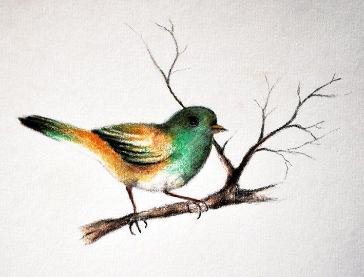 Pencil Colour Drawings Of Birds Pencildrawing2019