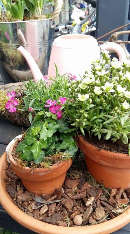 De tuin in met bloemen of op je balkon