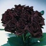True black roses aren't completely black. These are called Bacarra roses, and are extremely dark red. Most beautiful thing ever.