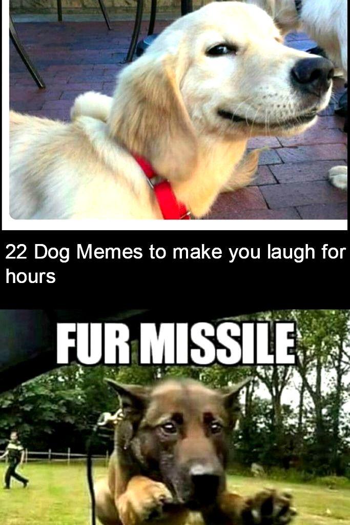 Laughing So Hard Dog Meme Dog Meme Template In 2020 Dog Memes Funny Dog Memes Dogs