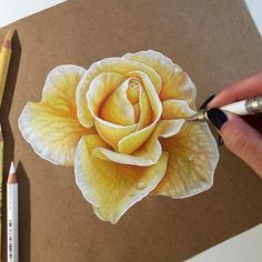 Which Flower Is Your Favorite Coloredpencil Rose Drawing DrawingsColored Pencil