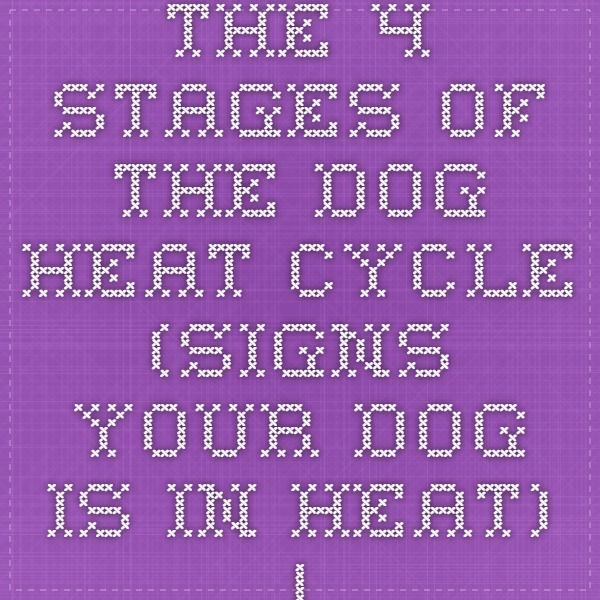 The 4 Stages of the Dog Heat Cycle (Signs Your Dog Is In Heat) | Ask a Dog Breeder: Dog Breeding Information, Storefront, Questions, Tips, Advice & Forums - Dog Mating