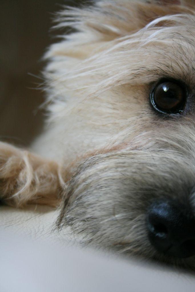 1/2 of sweet little Teddy | por photoklim