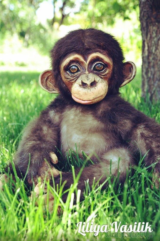 Шомпанзе ебет