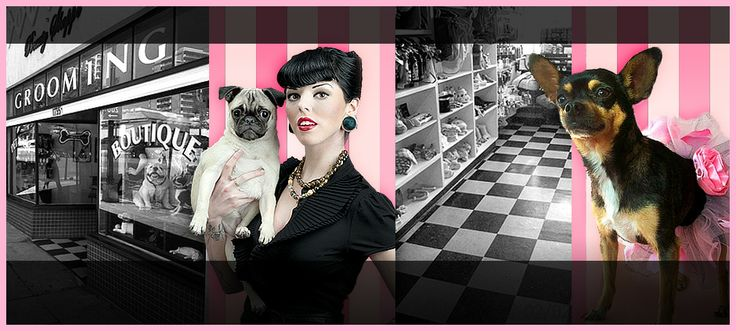Pet Grooming San Diego: Best dog grooming, and pet boutique in San Diego, California.