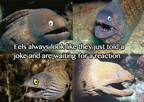 Eels always look like they just told a joke and are waiting for a reaction!: Giggle, Animals, Jokes, Funny Stuff, Humor, Things, Funnie