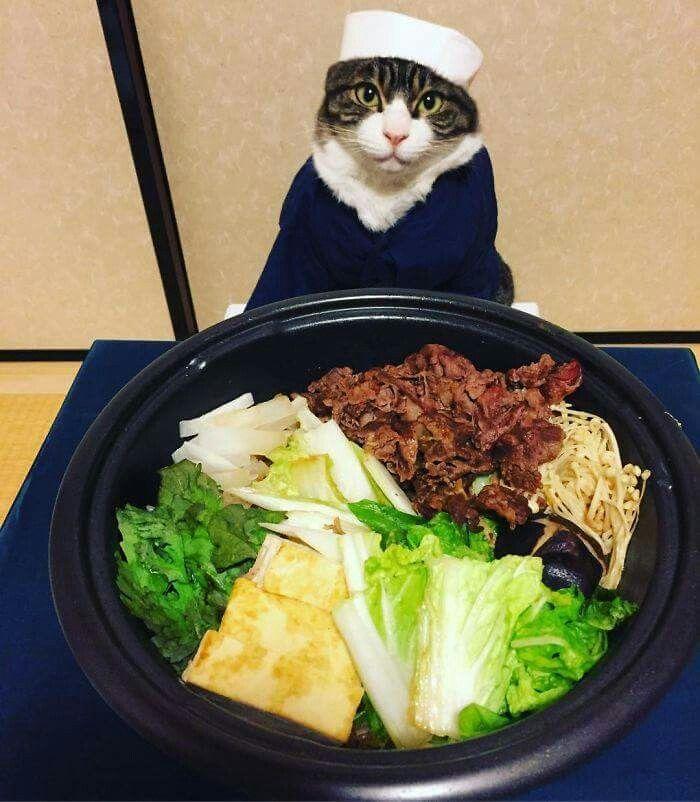 Chef kitty ❤