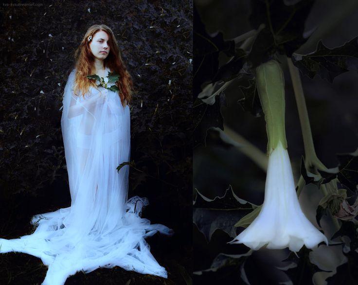 Botany series - White - Datura stramonium by Kva-Kva.deviantart.com on @DeviantArt