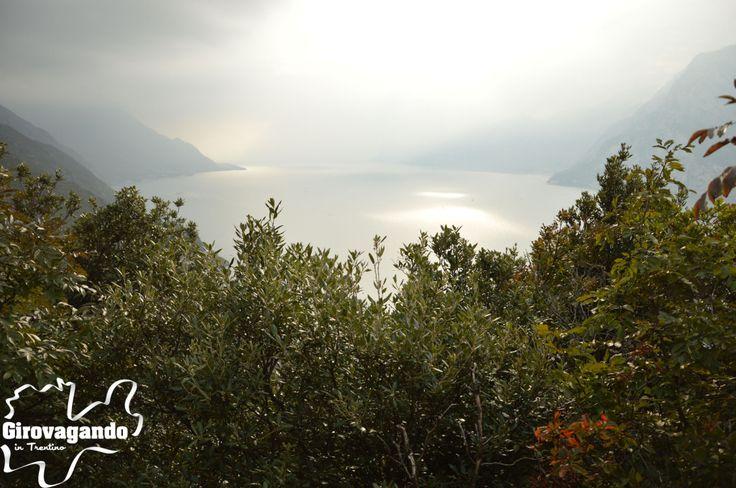 L'Olio Extra Vergine di Oliva e i prodotti del Garda Trentino - Girovagando in Trentino