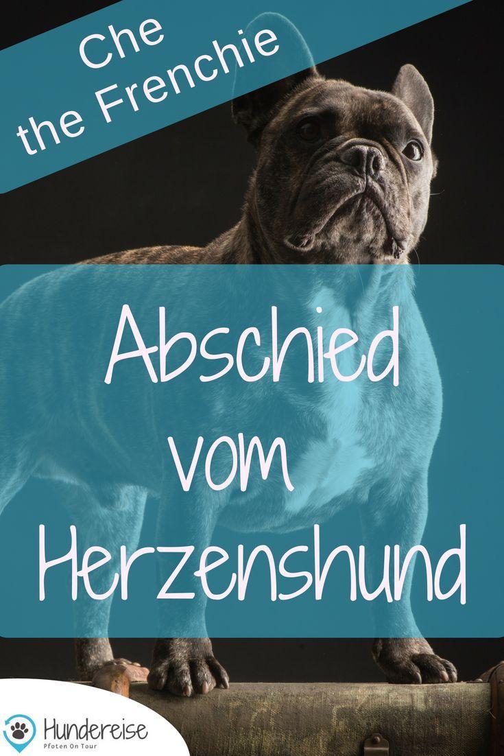 Che Und Der Unerwartete Abschied Franzosische Bulldoggenbabys Hunde Regenbogenbrucken Hund
