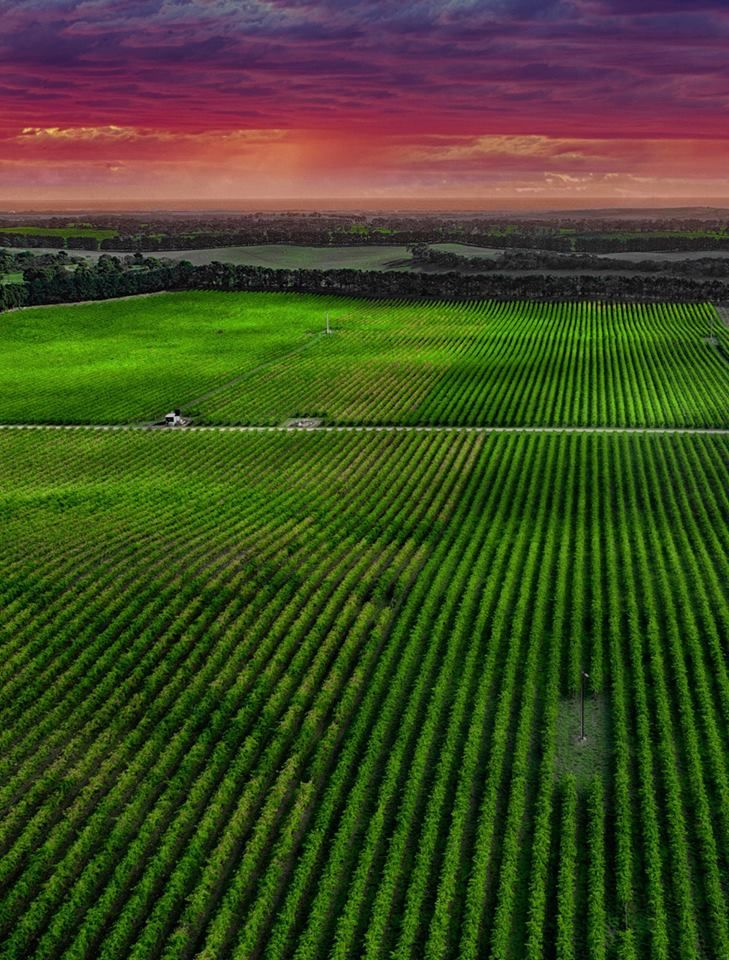 South Australia‏Verified account @southaustralia   A different take on #Coonawarra red from our world-famous @LimestoneCoast http://bit.ly/CoonawarraReds  Pic: Chao Yijun