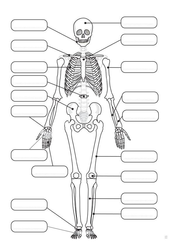 Dibujo de el esqueleto humanoDibujo de el esqueleto humano
