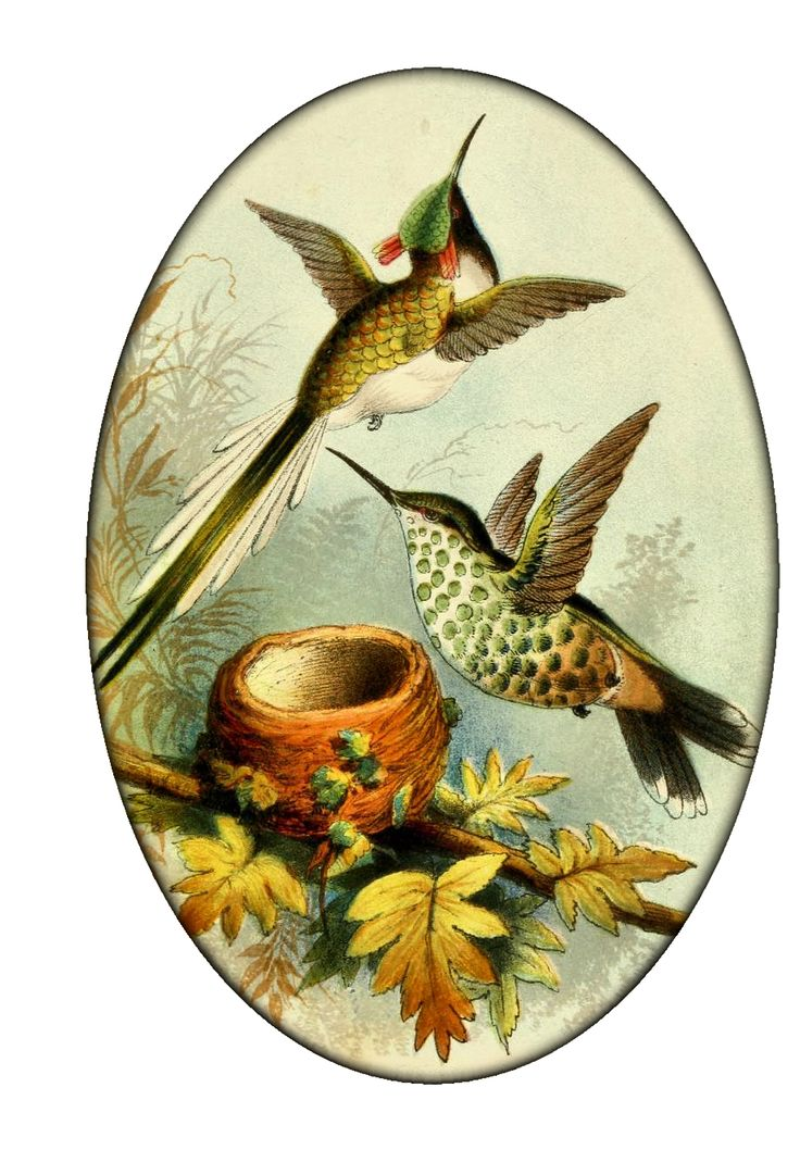 vintage Hummingbirds #2 from Create with TLC