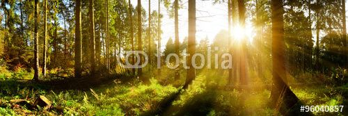 "Download the royalty-free photo ""Wald Panorama mit Sonnenstrahlen"" created by John Smith at the lowest price on Fotolia.com. Browse our cheap image bank online to find the perfect stock photo for your marketing projects!"