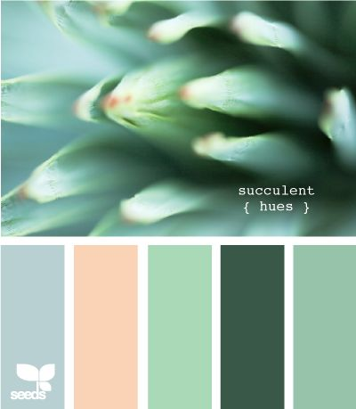 succulent hues - current bedroom colors (minus the blue which i think i'd like to incorporate)