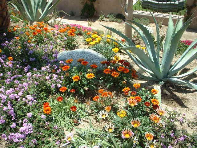 Best 25+ Zero scape ideas only on Pinterest | Desert landscaping ...