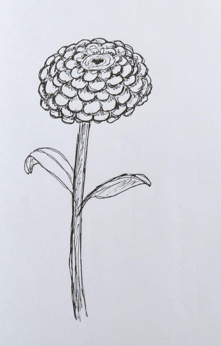 coloring sheet of zinnias Color the flower with colored