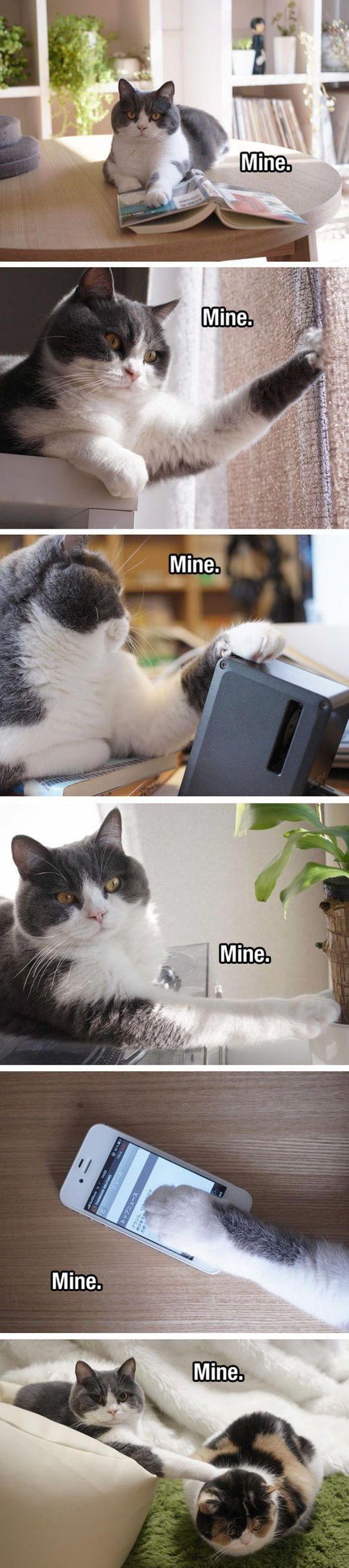 Memes de animales del día 30 fotos – Ep26 #memes #animalmemes #lovelyanimalsworld