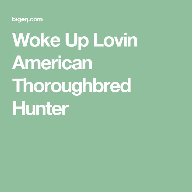 Woke Up Lovin American Thoroughbred Hunter