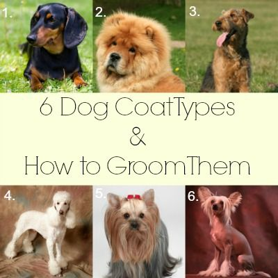 121 best dog grooming images on pinterest dog grooming dog 6 dog coat types and how to groom them cowboymagic solutioingenieria Images