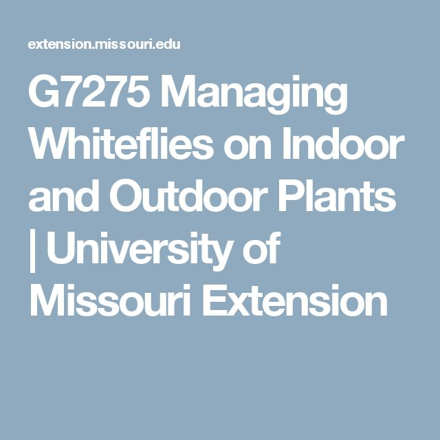 G7275 Managing Whiteflies on Indoor and Outdoor Plants   University of Missouri Extension