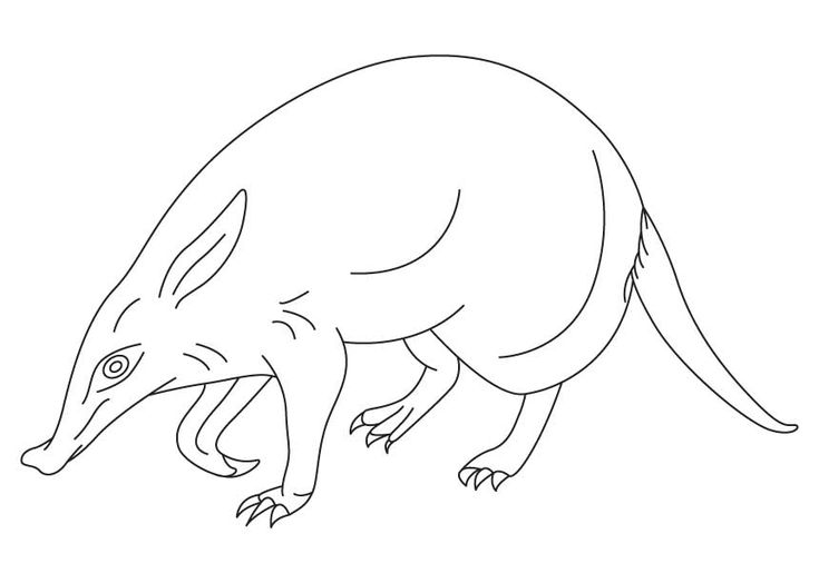 Coloring Pages Water Animals : Best images about water animals coloring pages on