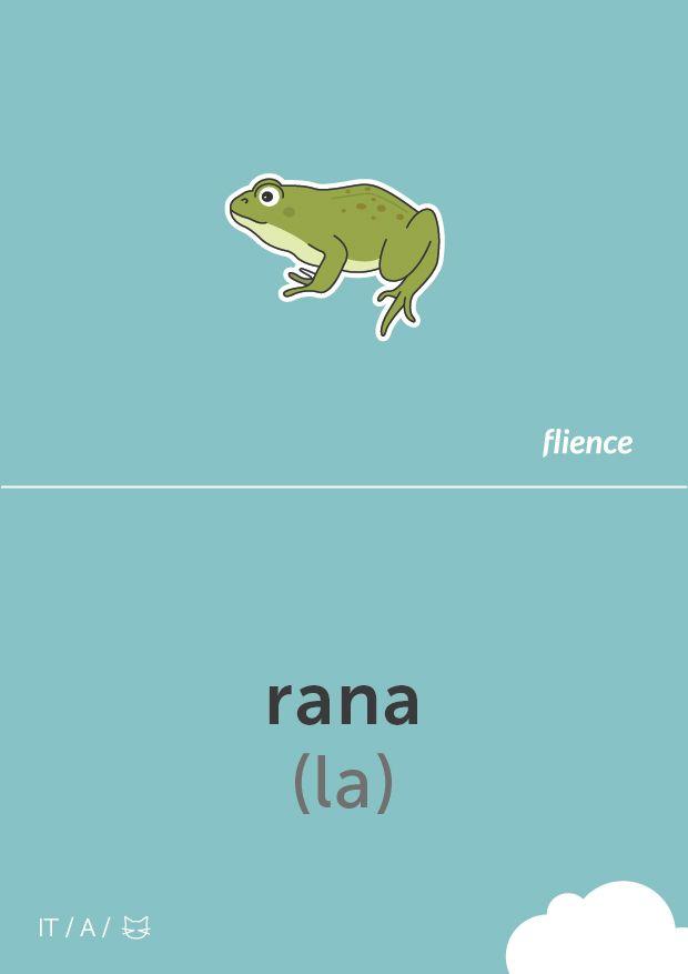 Rana ~ Frog
