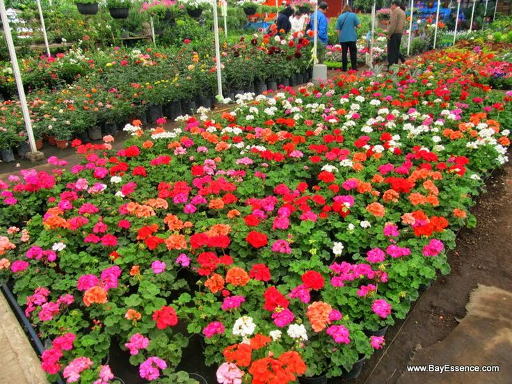 Beds of Flowers | Xochimilco's Floating Gardens | www.bayessence.com