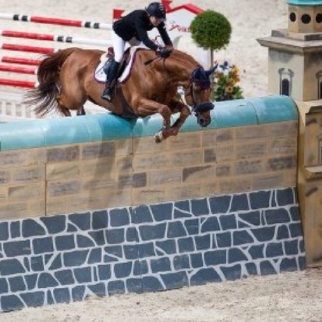 1000 Images About The Ultimate Show Jumping Board On