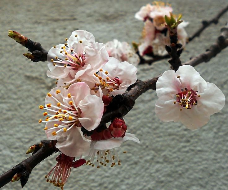 Spring by marilenavaccarini